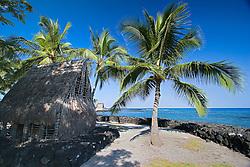 Reconstructed acient Hawaiian commoners' house, made of Ohi`a wood, Ti leaves, and Pili grass, Coconut Palms, Cocos nucifera, Pu`uhonua o Honaunau or Place of Refuge National Historical Park, Honaunau, Big Island, Hawaii