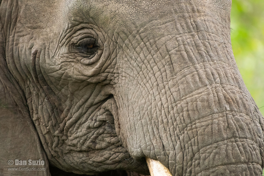 Close-up of the eye of an African Elephant, Loxodonta africana, in Lake Manyara National Park, Tanzania