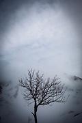 A bare tree La Mongie, ski resort, in a thick fog.