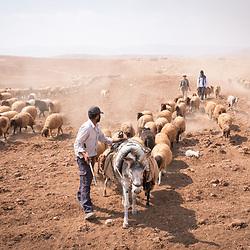 Shepherding, Jordan Valley