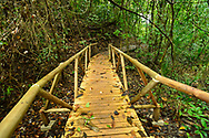 A wooden pedestrian bridge in the tropical rainforest of Manuel Antonio National Park, one of the smallest and most visited parks in Costa Rica.