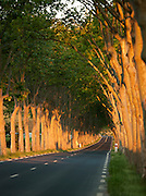 Tree lined country road in the Languedoc region of France