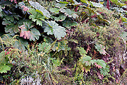 Very rich and diverse vegetation in the cloud forest of Yanacocha Reserve, Ecuador. The altitude is about 3500 meters.