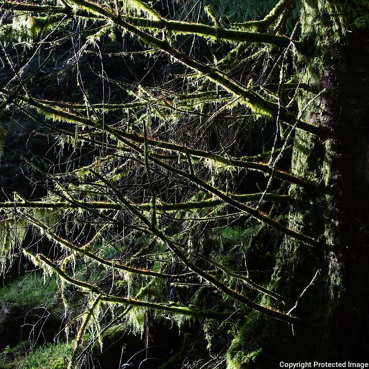 Ardgartan Forest V, Argyll & Bute, Scotland.