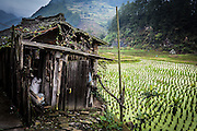 China, Yangshuo town rice paddies