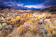 Sagebrush in the Alabama Hills under the Sierra Nevada Mountains, Owen's Valley, California USA