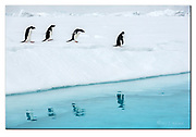 Penguin reflection.  Adelie penguins reflect in the ice cold Antartic water at Kinnes Cove, Antarctica.  Nikon D850, 70-200mm @ 116mm, f6.3, EV+0.33, 1/1600sec, ISO125, Aperture priority