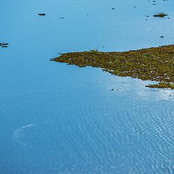 """""""Lagoa (paisagem) fotografado em Linhares, Espírito Santo -  Sudeste do Brasil. Bioma Mata Atlântica. Registro feito em 2014.<br /> <br /> <br /> <br /> ENGLISH: Lagoon Landscape photographed in Linhares, Espírito Santo - Southeast of Brazil. Atlantic Forest Biome. Picture made in 2014."""""""