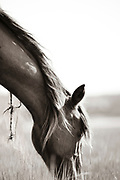 """""""All truths are easy to understand once they are discovered; the point is to discover them"""" ~ Galileo Galilei<br /> <br /> Tracie Spence's fine art photography series of The Spanish Wild Mustangs."""