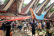 """Indonesia, Sulawesi. A coffin with a body of a deceased is being put in a lokkian, a special funeral construction.<br /> <br /> The most important ceremony in Tana Toraja is a funeral, because of the beliefs, that without proper funeral rites the soul of the deceased will be not only enter the second life, but also will bring a misfortune to the whole members of the family.<br /> Although Torajan funeral tradition can vary depending on a particular village, a typical ceremony lasts for 4 days. The first day is a procession, during which the deceased is visiting the whole village. Second day it's """"receiving"""", when all the guests arrive and are welcomed by the family members. The third day is the most bloody, because of the buffalo slaughtery (the Torajans believe that the animals should follow people in the second life). On the fourth day the body is taken to the grave."""