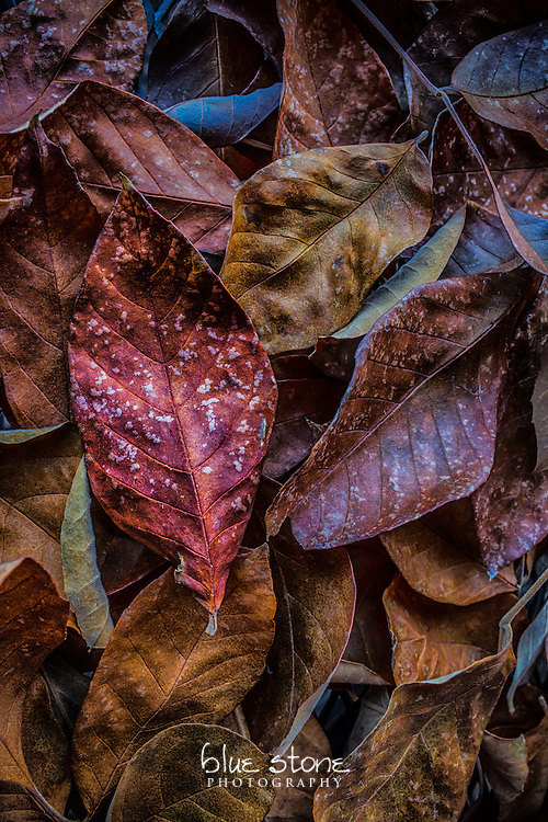 Autumn leaves with a palette of rich colors including red, burgundy, gold and orange.<br /> <br /> Wall art is available in metal, canvas, float wrap and standout. Art prints are available in lustre, glossy, matte and metallic finishes.