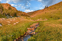 This unnamed creek flowed right past my campsite at 10,000 feet in the Cloud Peak Wilderness. Golden sunlight filled the valley before a thunderstorm approached.