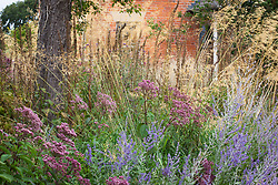 Autumn border at Fields Farm with Perovskia atriplicifolia 'Blue Spire', Stipa gigantea, Eupatorium purpureum and foxglove seedheads