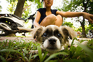 A dog stretches out its muzzle, curious about the camera. Lenin park, hanoi, Vietnam, Asia.