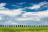 Row of trees and landscape off North Cedar Hollow road, Bingham county, Idaho