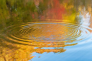 Water Ripples, Concentric Circles Patterns in Nature, Elizabeth A Morton National Wildlife Refuge, Noyack, Sag Harbor, NY