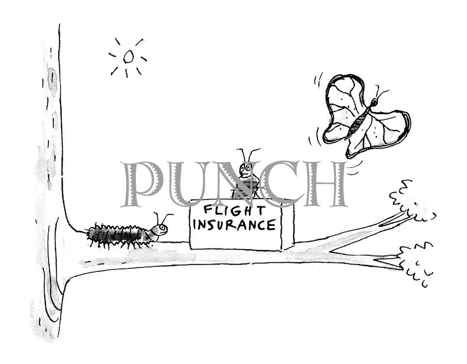 (Caterpillar approaching flight insurance desk on branch)