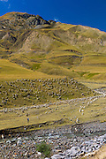 Mountain sheep and goats with shepherd in Val de Tena at Formigal in the Spanish Pyrenees mountain, Northern Spain