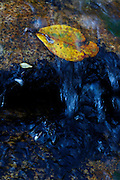 Pirenopolis_GO, Brasil.<br /> <br /> Parque Estadual da Serra dos Pireneus em Pirenopolis, Goias.<br /> <br /> Serra dos Pirineus State Park in Pirenopolis, Goias.<br /> <br /> FOTO: MARCUS DESIMONI / NITRO