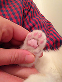 Kitten Found with Paws Frozen to Fence Seeks New Home