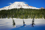 Mt Rainier at Reflection Lakes with three small trees
