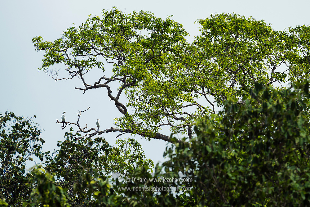 Birds in Northern Rote, Nusa Tenggara Timur, Indonesia