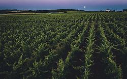 THEMENBILD - der Vollmond über einem Weinberg, aufgenommen am 04. Juli 2020 in Novigrad, Kroatien // the full moon over a vineyard in Novigrad, Croatia on 2020/07/04. EXPA Pictures © 2020, PhotoCredit: EXPA/ JFK