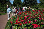 Queen Mary's Gardens in Regents Park. In the Inner Circle of the park is an incredible Rose Garden with hundreds of varieties. It is one of those secret special places in London where people come to relax.