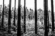 Forest near de center. FEDASIL Sugny asylum center. Sugny, Belgium. July 2015. I took these photographs during an international volunteer program that I liderate with an international volunteering group. FEDASIL Sugny asylum center. Sugny, Belgium. July 2015. I took these photographs during an international volunteer program that I liderate with an international volunteering group.