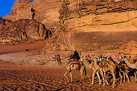 Bedouin man and his camels, Arabian Desert, Wadi Rum, Jordan.