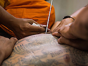 "14 MARCH 2014 - NAKHON CHAI SI, NAKHON PATHOM, THAILAND: A Buddhist monk gives a man a sak tant tattoo at Wat Bang Phra. Wat Bang Phra is the best known ""Sak Yant"" tattoo temple in Thailand. It's located in Nakhon Pathom province, about 40 miles from Bangkok. The tattoos are given with hollow stainless steel needles and are thought to possess magical powers of protection. The tattoos, which are given by Buddhist monks, are popular with soldiers, policeman and gangsters, people who generally live in harm's way. The tattoo must be activated to remain powerful and the annual Wai Khru Ceremony (tattoo festival) at the temple draws thousands of devotees who come to the temple to activate or renew the tattoos. People go into trance like states and then assume the personality of their tattoo, so people with tiger tattoos assume the personality of a tiger, people with monkey tattoos take on the personality of a monkey and so on. In recent years the tattoo festival has become popular with tourists who make the trip to Nakorn Pathom province to see a side of ""exotic"" Thailand.   PHOTO BY JACK KURTZ"
