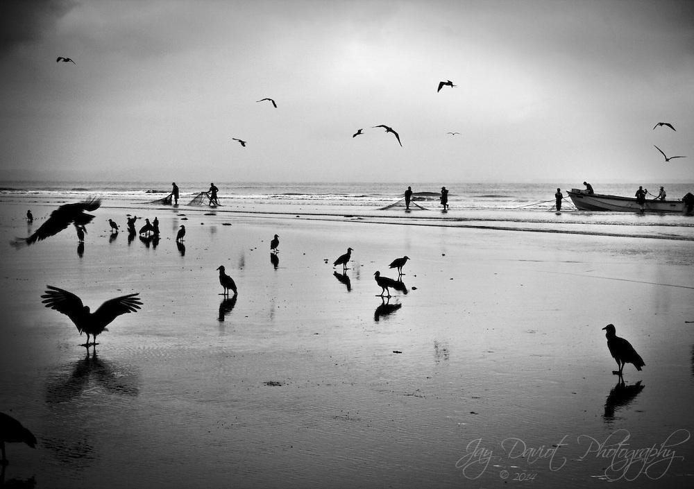 Birds flock to the fisherman to nab their catch.