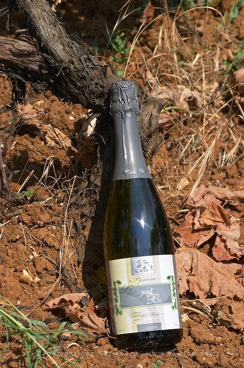 Bottle of Gangas Bijeli Pjenusac Suhi Brut white sparkling wine. By the foot of a vine in the vineyard. Vita@I Vitaai Vitai Gangas Winery, Citluk, near Mostar. Federation Bosne i Hercegovine. Bosnia Herzegovina, Europe.