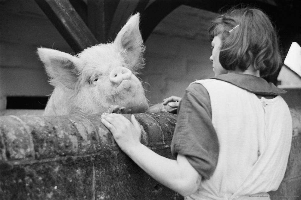 Feeding a Pig, Borstal Institiute, England, 1937