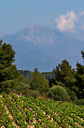 Vineyard with Mount Athos top in the background. Mount Athos. Tsantali Vineyards & Winery, Halkidiki, Macedonia, Greece. Metoxi Chromitsa of St Panteleimon monastery.