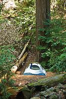 Campground on Pine Ridge Trail, Big Sur, California.