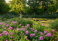 A large bed of Rosa 'Jacques Cartier' in front of the conservatory at Chiswick House Gardens, Chiswick House, Chiswick, London, UK
