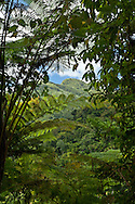 A break in the clouds and a peek through the rain forest growth highlight a ridge in the El Yunque rain forest.