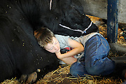A boy catches a few winks with his cow during the Baxter County Fair.