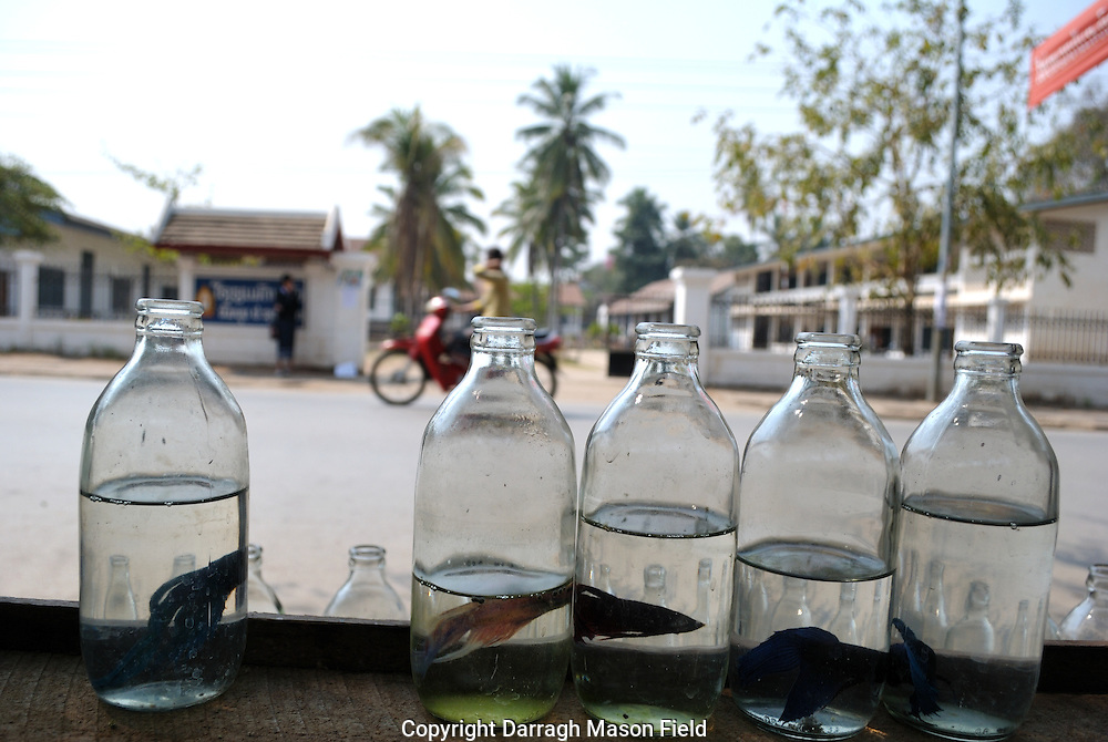 Fish for sale in bottles on the street in Luang Prabang