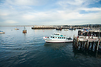 Whale watching in Monterey Bay, California.