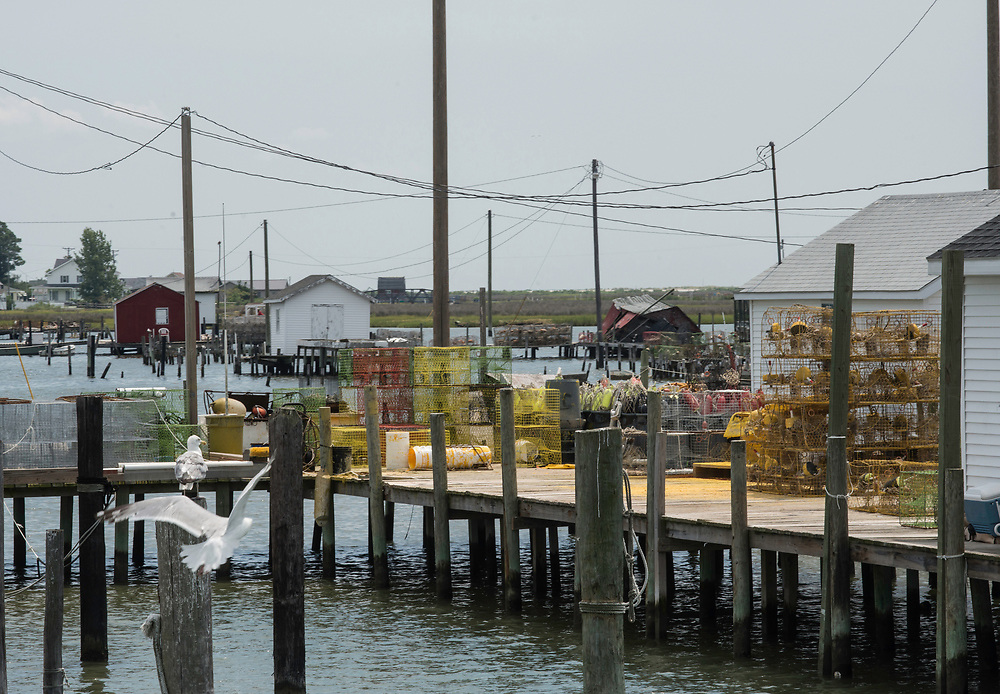 August 4, 2017 - Tangier Island, VA - Crab traps and seagulls fly near a crab shack just off of Tangier Island, Virginia. Set on pilings hundreds of yards from shore, the little shacks, where watermen monitor crabs as they shed their hard shells to become soft-shells, are like Tangier itself: islands apart. Perched 12 miles from the Eastern Shore of Virginia, Tangier (about three miles long and 1 1/2 miles wide) is accessible only by boat or by plane; most visitors take the ferry. Boats outnumber cars, and almost everyone makes a living from the water.Photo by Susana Raab/Institute