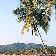 Palm trees with beautiful seascape on background with mountains, bay, Palolem beach and shacks.