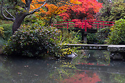 Flanked by trees displaying fall color, the Heart Bridge stretches across Mapes Creek in the Kubota Garden, Seattle, Washington. The Kubota Garden, a 20-acre Japanese garden, was established in 1927 by Fujitaro Kubota, who immigrated to Seattle from Kochi Prefecture, Japan. The Heart Bridge was based on a red bridge in a garden on his home island of Shikoku.