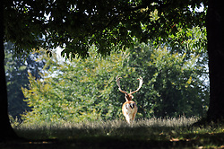 © Licensed to London News Pictures. 28/08/2013<br /> Hot weather in Sevenoaks,Kent today (28.08.2013)<br /> People enjoying the hot weather in the last full week of the School summer holiday at Knole Park,Sevenoaks,Kent.<br /> Photo credit :Grant Falvey/LNP