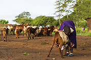 One of the most enjoyable parts of our trip was the interaction we had while spending the morning in a Maasai village.  Traditionally the Maasai diet consists almost entirely of either cow or goat milk, while the meat of their animals is saved for special occasion.  Animals define the Maasai people, but the proliferation of education and technology are slowly affecting the way they live their lives.