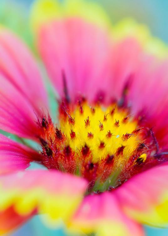 A Soft Focus Pink Wildflower