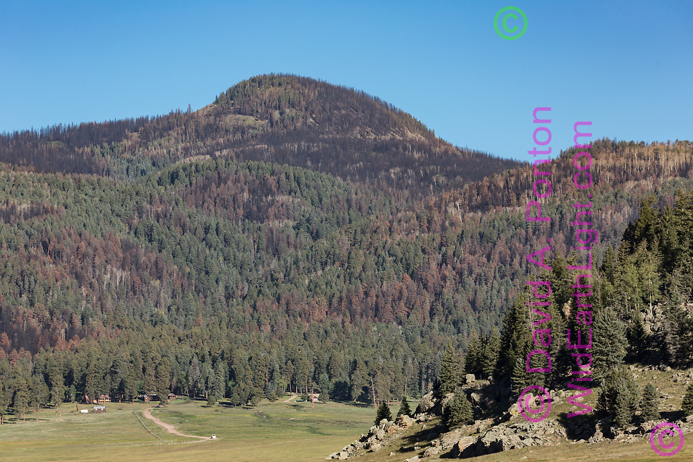 Burned areas from the Thompson Fire on the southeast side of Redondito Peak, Valles Caldera National Preserve, Jemez Mountains, NM. Viewed from the Valle Grande where the road crosses the East Fork of the Jemez River. © David A. Ponton