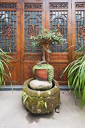April 26, 2018 - Chengdu, Chengdu, China - Chengdu, CHINA-26th April 2018: A pot of bonsai plant can be seen in Chengdu, southwest China's Sichuan Province, April 26th, 2018. (Credit Image: © SIPA Asia via ZUMA Wire)