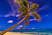 Palm tree on the beach at Tokoriki Island Resort, Fiji Islands